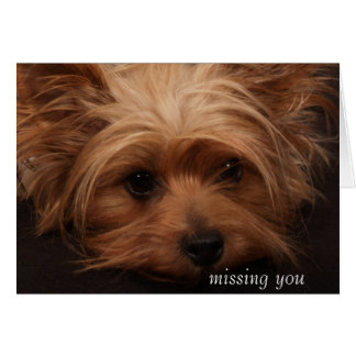 Yorkie Missing You Card