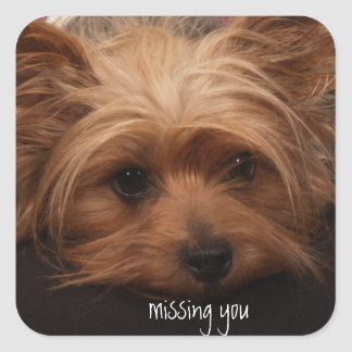 Yorkie Missing You Square Sticker
