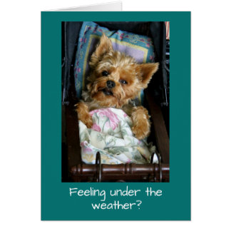 Yorkie Pup in Baby Carriage Card