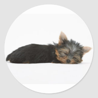 Yorkie Puppy Sleeping Classic Round Sticker