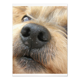 yorkie up close.png magnetic invitations