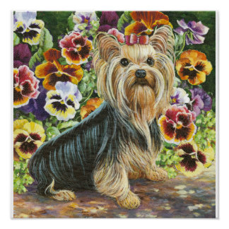 Yorkie Yorkshire Terrier in the Pansies Print