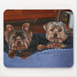 Yorkies - buddies mouse pad