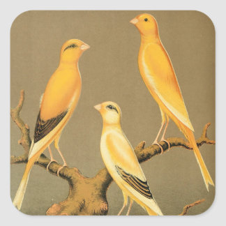 YORKSHIRE CANARIES SQUARE STICKER