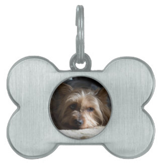 yorkshire / Silky terrier pet tag