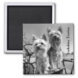 Yorkshire Terrier, Black and White, Text Magnet
