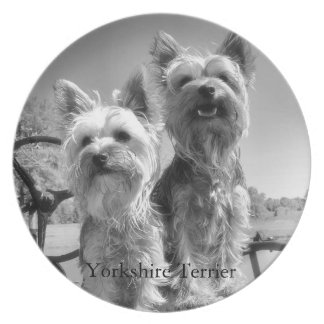 Yorkshire Terrier, Black & White, Plates