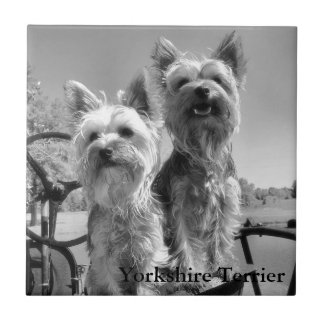 Yorkshire Terrier, Black & White, Tile