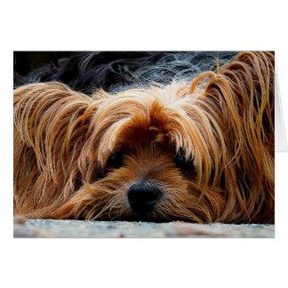 Yorkshire Terrier Blank Greeting Card