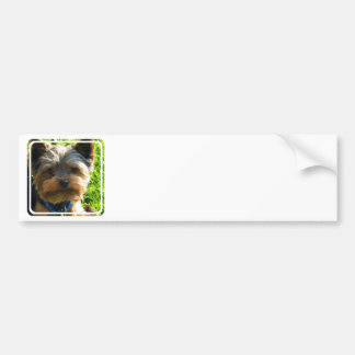 Yorkshire Terrier Bumper Stickers