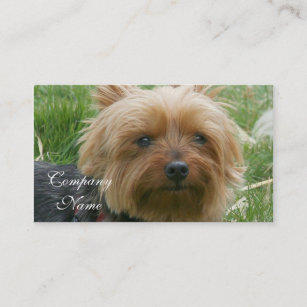 Yorkshire terrier business cards business card printing zazzle ca yorkshire terrier business cards reheart Choice Image