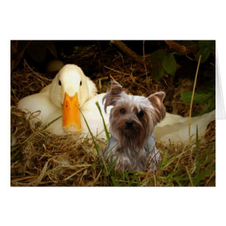 Yorkshire Terrier Card With Duck