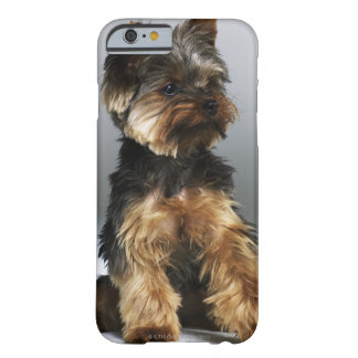 Yorkshire terrier, close-up barely there iPhone 6 case
