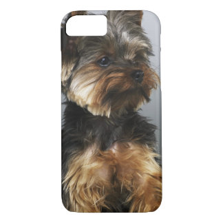 Yorkshire terrier, close-up iPhone 8/7 case