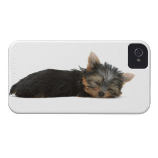 Yorkshire Terrier dog cute blackberry bold case iPhone 4 Case-Mate Cases