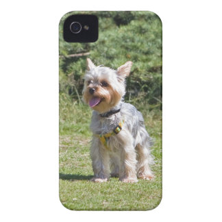 Yorkshire Terrier dog cute blackberry bold case