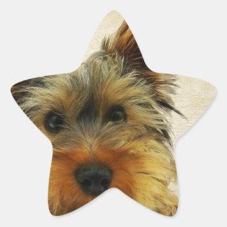 Yorkshire Terrier Dog Star Sticker