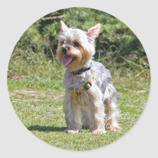 Yorkshire Terrier dog sticker, stickers, gift idea Round Sticker