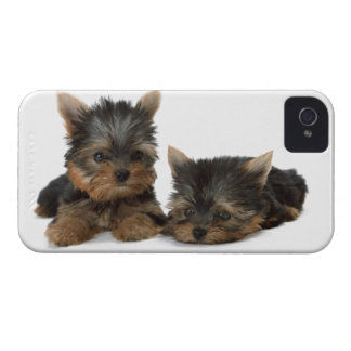 Yorkshire Terrier dogs cute blackberry bold case