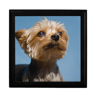Yorkshire Terrier Gift Box