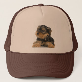 Yorkshire Terrier Hat