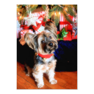 Yorkshire Terrier in bell collar with Christmas Card