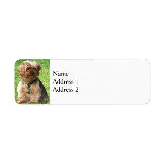 Yorkshire Terrier in Park Return Address Label