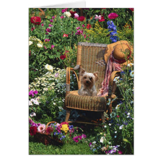 Yorkshire Terrier In The Garden Greeting Card