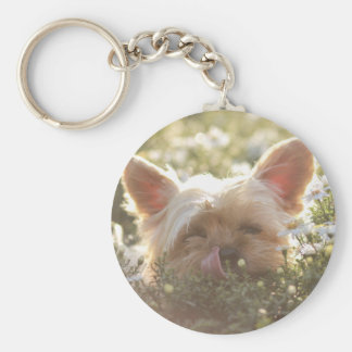 Yorkshire Terrier Laying in Sun licking lips Keychain