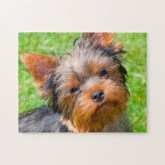 Yorkshire Terrier looking up Jigsaw Puzzle