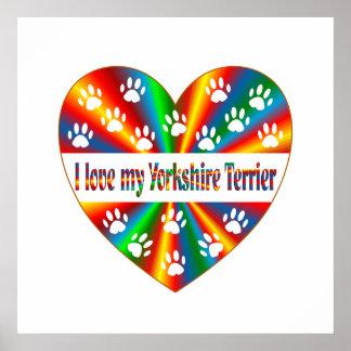 Yorkshire Terrier Love Poster