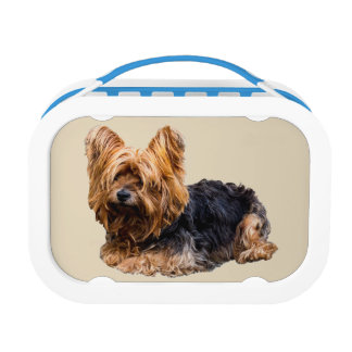 Yorkshire Terrier Lunch Box