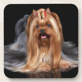 Yorkshire Terrier on black Coaster