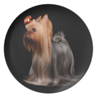 Yorkshire Terrier on black Dinner Plates