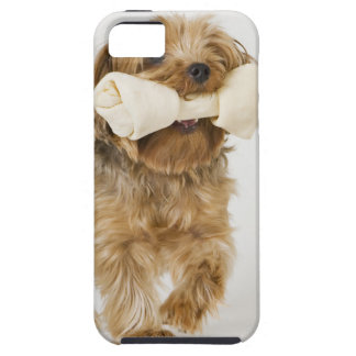 Yorkshire Terrier on white background walking iPhone 5 Cover