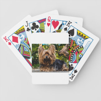 Yorkshire Terrier Pet Dog Bicycle Playing Cards