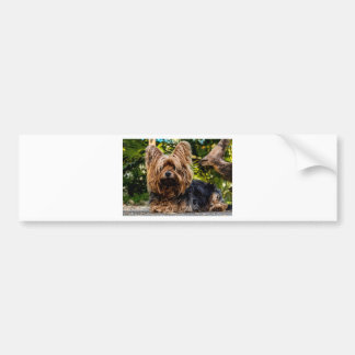 Yorkshire Terrier Pet Dog Bumper Sticker