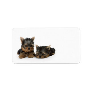 Yorkshire Terrier Puppies Address Label