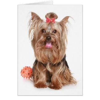 Yorkshire Terrier Puppy Dog Blank Card
