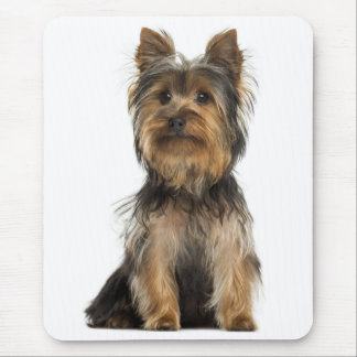 Yorkshire Terrier Puppy Dog  - Canine Mouse Pad