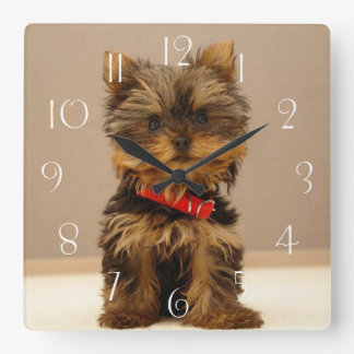 Yorkshire Terrier Puppy Dog Square Wall Clock