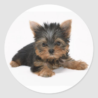 Yorkshire Terrier Puppy Dog Sticker / Seals