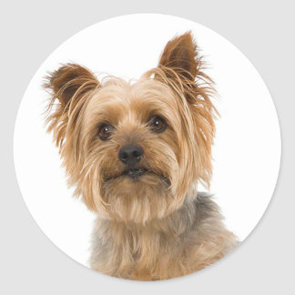 Yorkshire Terrier Puppy Dog Stickers