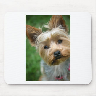 "Yorkshire Terrier Puppy - ""jjhelene design"" Mouse Pad"