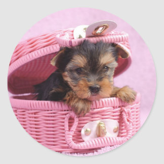 Yorkshire terrier puppy round sticker