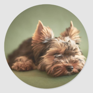 Yorkshire Terrier Round Sticker