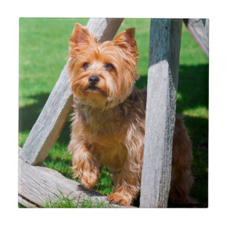 Yorkshire Terrier standing in a wagon wheel Tile