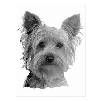 Yorkshire Terrier Stylized Image Postcard