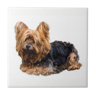 Yorkshire Terrier Tile