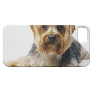 Yorkshire terrier wearing red bows iPhone 5 cover